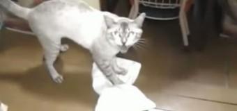 Видео, на котором кот самостоятельно моет полы тряпкой, покорил пользователей
