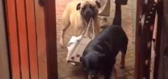 Сеть покорило видео с собакой, которая помогает хозяину нести сумки