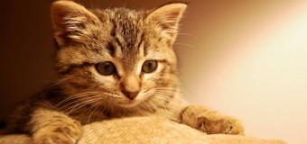 Хит сети: кот показал, как правильно делать массаж живота. Видео