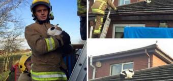 Хит сети: спасатели гонялись за кроликом по крыше дома. Фото