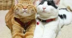 Влюбленные коты покорили сеть своим примером. Фото