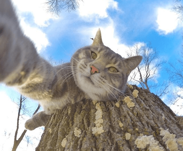 Кот делает трюки