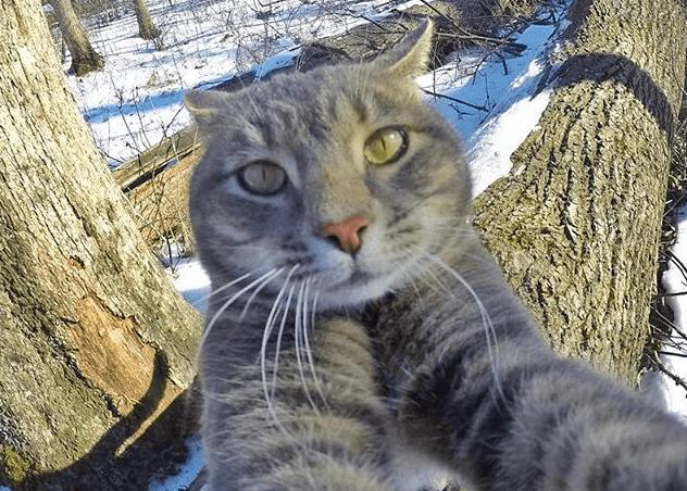 Фото как кот делает селфи