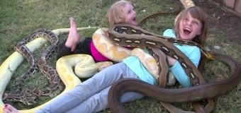 Хит сети: дети играют со змеями и варанами, которых отец принес домой. Видео