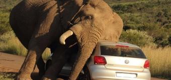 Хит сети: в Индии слон пытался передвинуть колонну авто. Видео