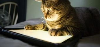 Современные коты с планшетами покорили сеть. Видео
