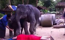 Хит сети: слоны сделали отличный массаж мужчине. Видео