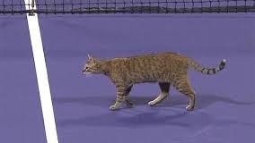 Кот-теннисист стал звездой интернета. Видео