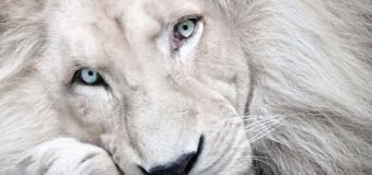 В Запорожье из цирка сбежал лев. Фото