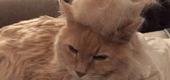 Смешные коты с уморительными прическами стали звездами сети. Фото
