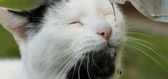Забавный кот с бородой стал новой звездой сети. Фото