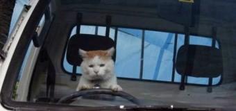 В сети смеются над грустным котом за рулем в России. Фото
