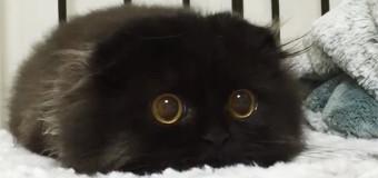 Милый кот с огромными глазами влюбил в себя пользователей сети. Фото