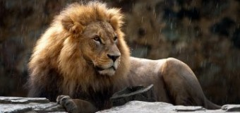 Под Мариуполем лев напал на работника зоопарка