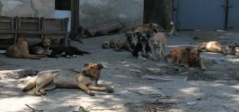 В Днепропетровске нет вакцин от бешенства: люди опасаются нападений собак