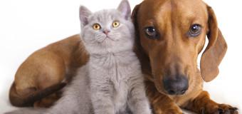 Кот с замашками собаки стал звездой сети. Видео