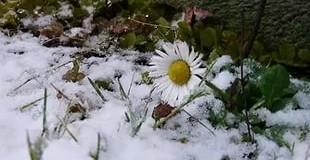 Зима в Украине побила температурные рекорды