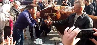 Поцелуй коровы и Ляшко высмеяли в сети. Фото