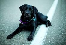 В Израиле собак учат диагностировать рак