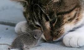 Обычный кот стал звездой сети, показав настоящую охоту. Видео