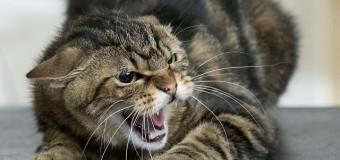 В Днепропетровской области из-за кота умер мужчина