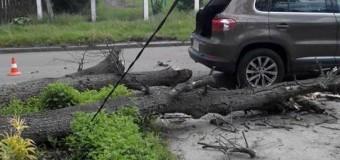 В Житомире дерево придавило автомобиль с людьми. Фото