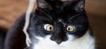 Одесские спасатели сняли с крыши балкона девушку, которая полезла за котом