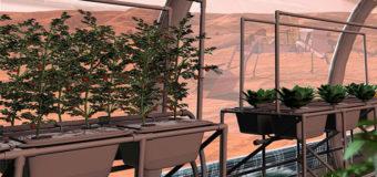 «Марсианские овощи» безопасны для человека