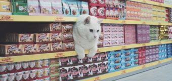 Реклама с кошками в главных ролях поразила пользователей сети. Видео