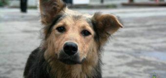 В Житомире задержали автомобиль, из которого расстреливали бездомных собак. Фото