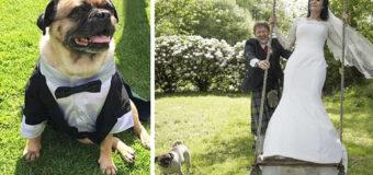 В Англии молодожены сделали собаку свидетелем на свадьбе