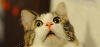 В Черкассах вместо кролика женщина купила мясо кошки