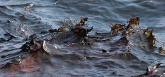Море в Крыму «отравили» мазутом
