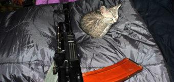 Бойцы АТО показали котов, которым посвящают стихи. Фото