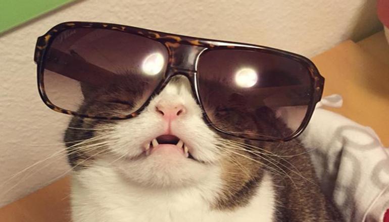 Курьез: кот-инопланетянин «взорвал сеть». Фото