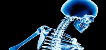 Ученые вырастили кость