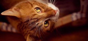 Курьез: кот-противник йоги вцепился в хозяйку. Видео