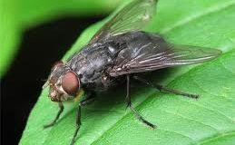 Хит сети: россиян будут кормить мясными мухами. Видео