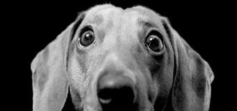 Подросток из-за собаки убил пенсионерку