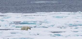 Арктика может освободиться от льда в 2016 году и стать туристической. Видео