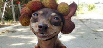 Фруктовая собака «взорвала» соцсети. Фото