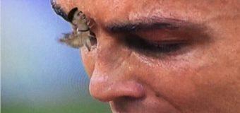 Сеть «взорвал» ночной мотылек на заплаканном лице Роналду. Фото
