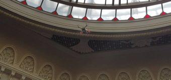 В ВР запустили дрон, чтобы отслеживать «кнопкодавов». Видео