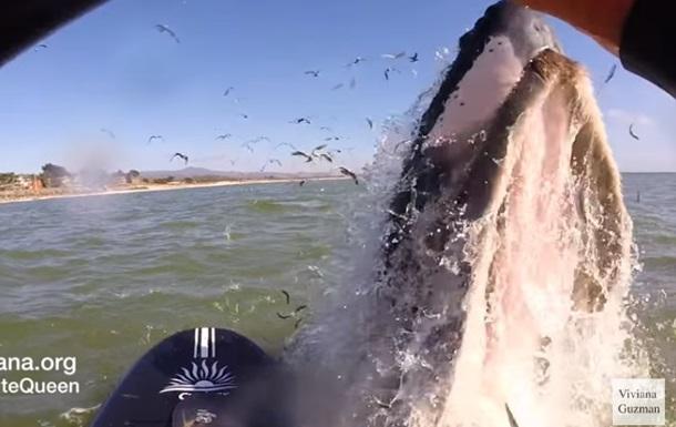 Кит неожиданно вынырнул из воды, шокировав серфингистку. Видео