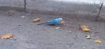 В Одессе между домами бродит голубой попугай. Фото