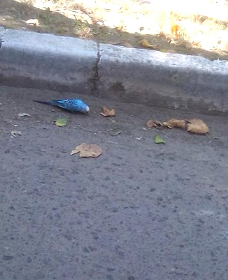 Одинокий и печальный попугай