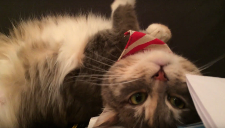 Кот-борец со сном рассмешил интернет. Видео