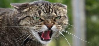 Смерть домашнего кота в Мариуполе: догулялся до бешенства
