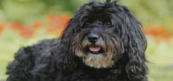 Пожилой китаец завещал 12 тысяч долларов собаке