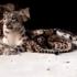 В Николаевском зоопарке произошла трагедия